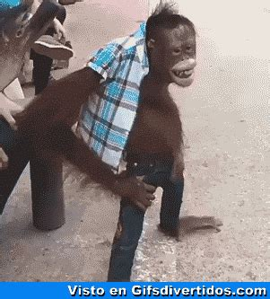 graciosos gif find & share on giphy