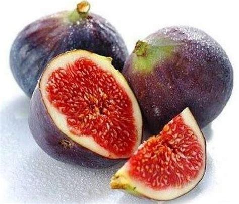 Bibit Tin Mr benih buah tin ara fig bibitbunga