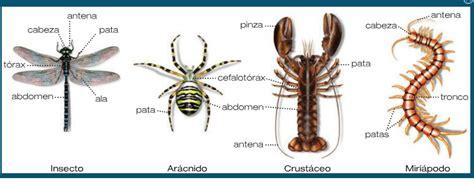 imagenes animales artropodos ceip san juan 6 186 primaria dibujos artr 243 podos