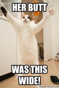 Crazy Cat Meme - crazy cats meme