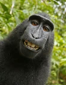 doing a black friday sale on amazon macaco rouba c 226 mera e tira foto sorrindo f 243 rum 183 habbid