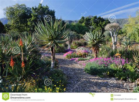 Ojai Botanical Gardens Springtime Bloom In California At Taft Botanical Gardens Ojai C Editorial Photo Image 70104856