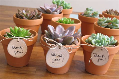 What To Do If You Lost A Gift Card - diy teacher s gift simple sweet mini succulents inhabitots