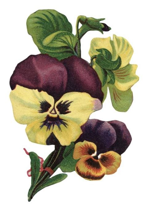 vintage picture  garden pansy flowers  vintage fangirl