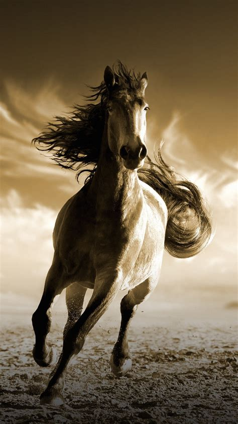 wallpaper running horse hd animals