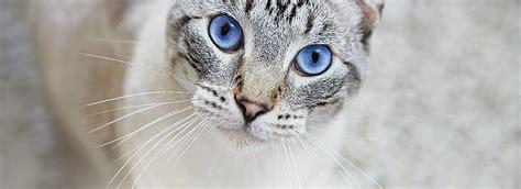 Proplan Kitten 1 purina 174 pro plan 174 cat food kitten food petsmart