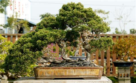 burke backyard triyae com burkes backyard bonsai various design