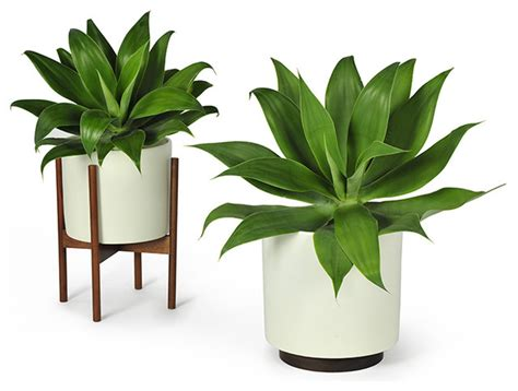 Modernica Case Study Planter W Plinth White Modern Indoor Planter Pots
