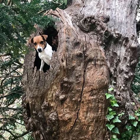 Doggie From Tree by Terrierman S Daily Dose Just Another Up A Tree