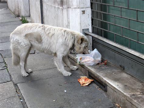 stray puppy file stray in rome jpg wikimedia commons