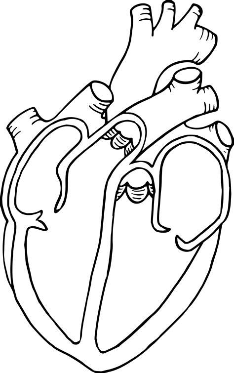 clipart heart diagram