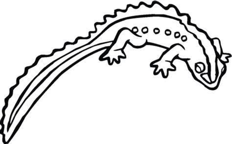 tiger salamander coloring page salamander 17 coloring page supercoloring com