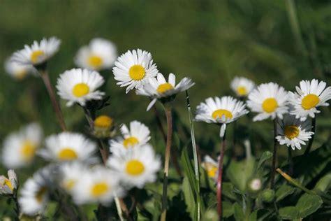 specie di fiori a sanremo scoperte altre 20 specie di fiori commestibili