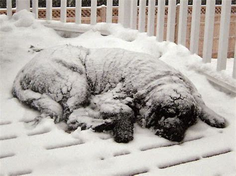 hypothermia in dogs thy january 2015