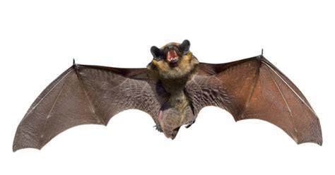 new coronavirus like virus found in bats