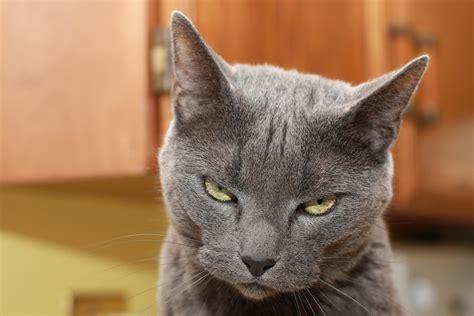 Cat Cat evil cat images search