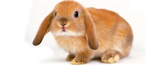 services toronto bunny visits toronto pet sitters
