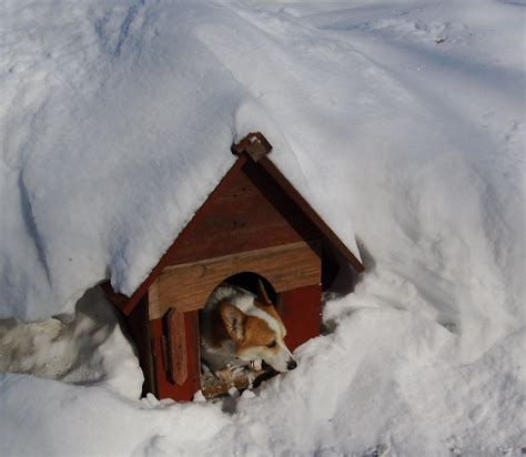 how to warm a dog house tips for heating a dog house during the winter