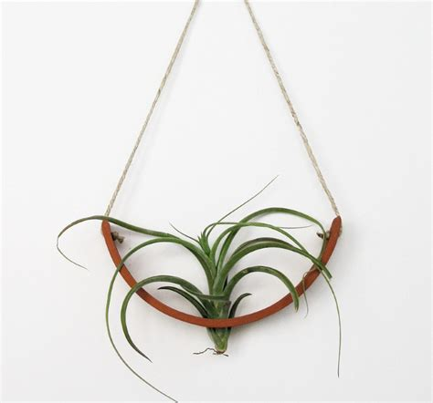 hanging air plant the top trends in modern air plant containers