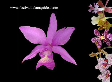imagenes jpg navideñas fondos de pantalla festival de la orquidea