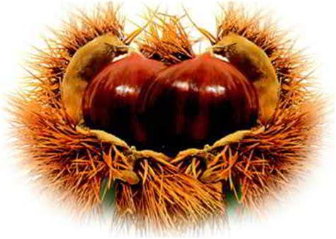 clipart castagne a scuola per crescere insieme viva l autunno