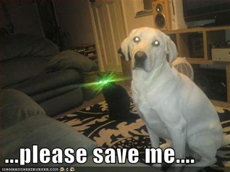 Dog Friday Meme