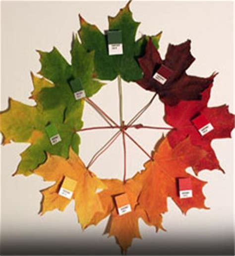 maple tree symbolism buy an affordable sugar maple tree at our online nursery
