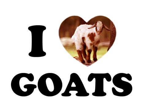 images of love dairy seeing with green eyes i love goats