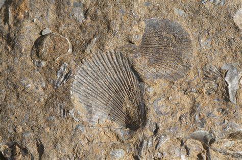 Fosil Kayu Purba fosil myrocktales