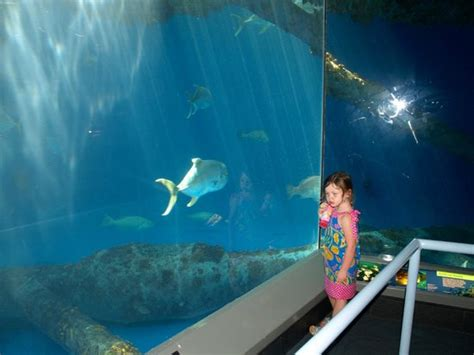 shark fish tank floor to ceiling viewing area picture