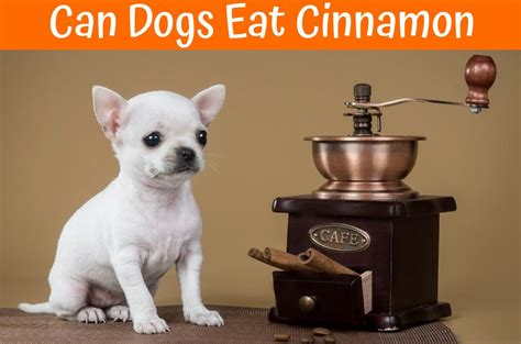 can dogs eat cinnamon can dogs eat cinnamon your guide about serving foods containing cinnamon to dogs
