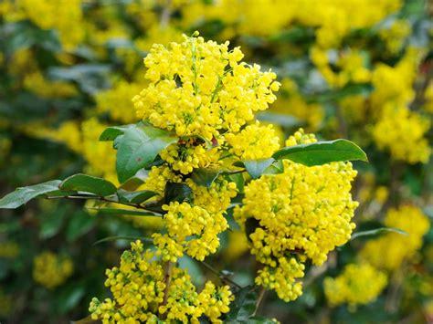 plants  flower  winter landscaping ideas