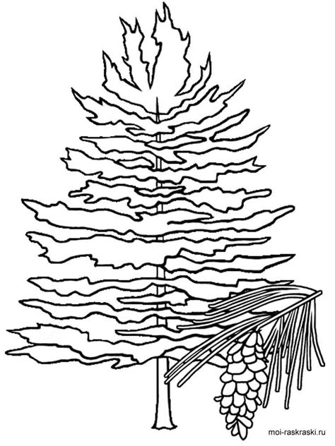 coloring page of pine trees fir tree coloring pages for kids free printable fir tree