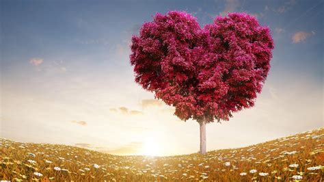images of love tree love tree live wallpaper android apps on google play