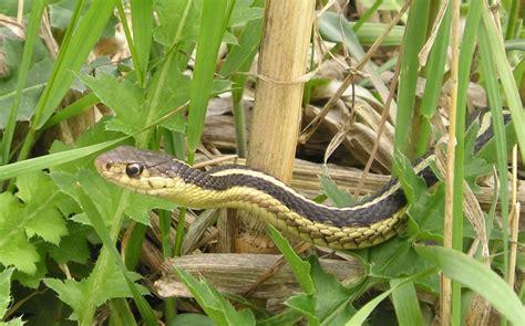 garden snake learn  nature