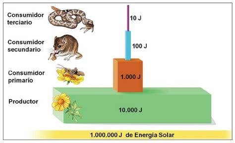 cadenas alimentarias piramides ecologicas pir 225 mides ecol 243 gicas 187 blog de biolog 237 a