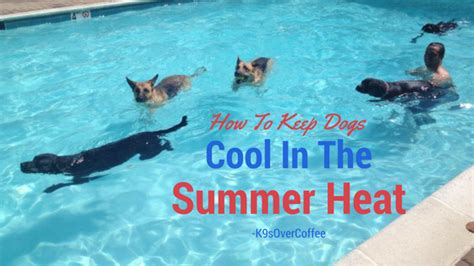 how to keep dogs cool in summer how to keep dogs cool in the summer heat