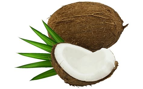 What Do Find 19 Free Shocking Coconut Clipart Fruit Names A Z With Pictures