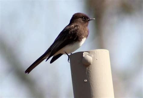 backyard bird finder sfv backyard bird identification san fernando valley audubon society