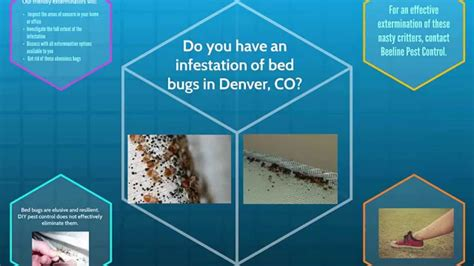 bed bug exterminator denver bed bug pest control denver co youtube