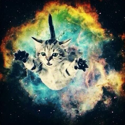 space cat wallpaper tumblr space cats tumblr