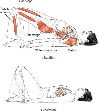 gluteus maximus fitness ejercicios bridges