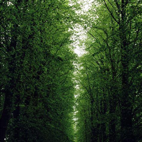 road  trees ipad wallpaper