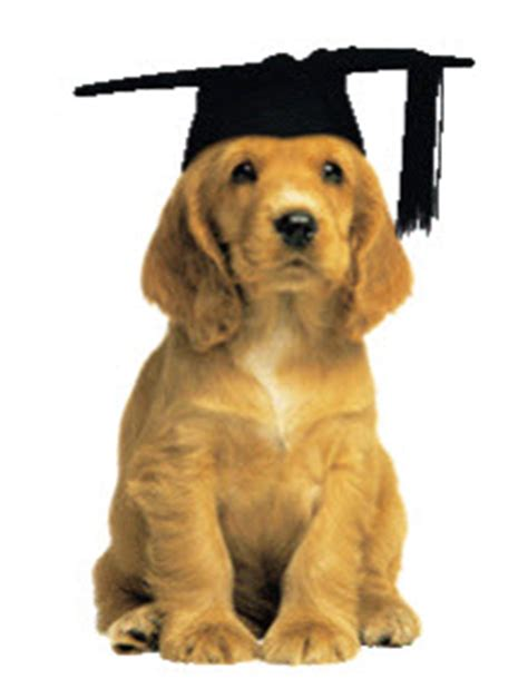 puppy classes wi pet classes waukesha wi obedience