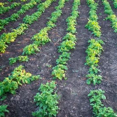 vegetable garden plants for sale vegetable plants from stark bro s vegetable plants for sale