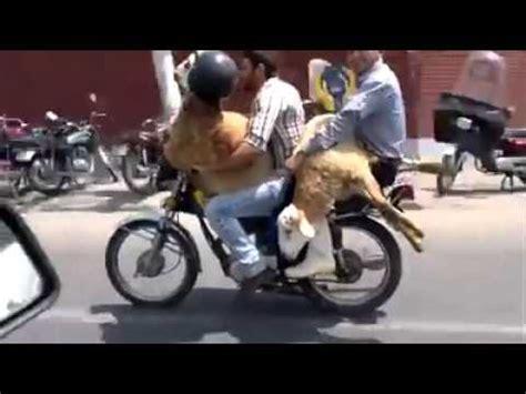 Motorrad Fahren Lustig by 2 Schafe Fahren Motorrad Lustig