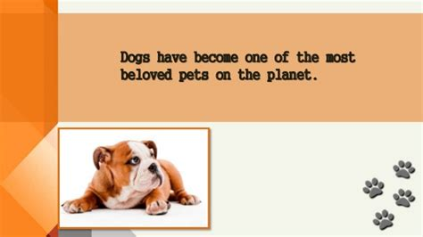information about puppies facts about dogs