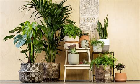 House Plants Australia ? Guide to the Best Indoor Plants