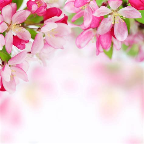 Flowers For Mother S Day by Spring Backgrounds Image Wallpaper Cave