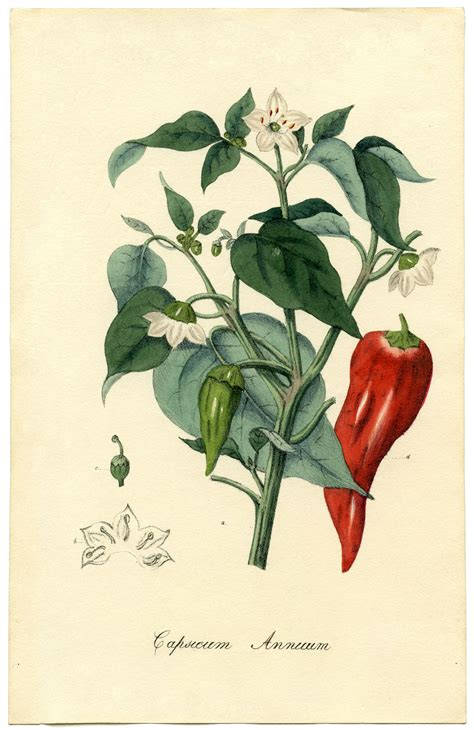 hot pepper decor for kitchen office and bedroom chili pepper kitchen decor hot pepper decor for kitchen